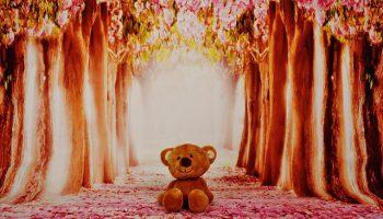 teddy-2014539_640